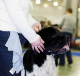 International Dog Show CACIB- FCI Eurasia-1