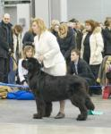 Интернациональная выставка Евразия-2008 International Dog Show Eurasia-2008