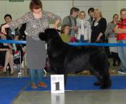 International Dog Show CACIB- FCI Eurasia-2
